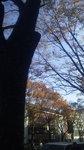 image/2009-12-01T17:24:171